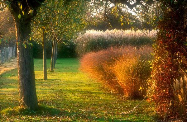 Varmt, höstligt släpljus över kraftiga gräsruggar tilltalar Greenspire Trädgårdskonsult.