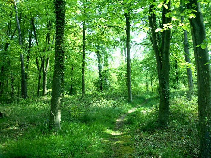 En vårskir lövskog fungerar som rena terapin för stressade själar.