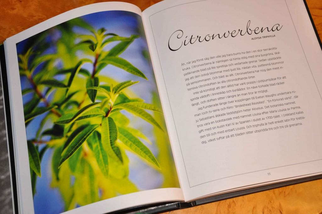 Uppslag om citronverbena ur Agneta Ullenius örtabok.