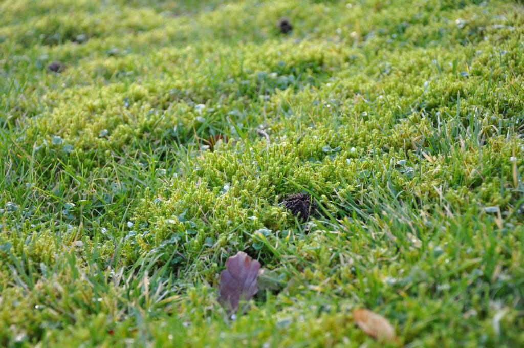 Mossa i motljus en mild vinterdag.