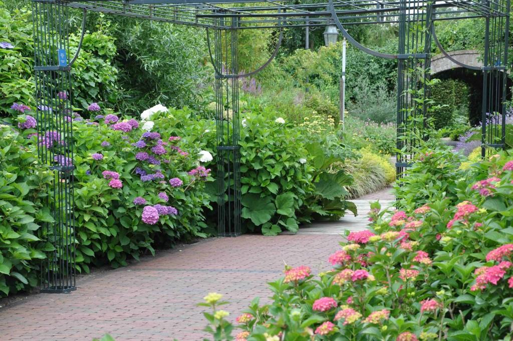 Blå och rosa hortensior balanseras upp med mycket grönt.