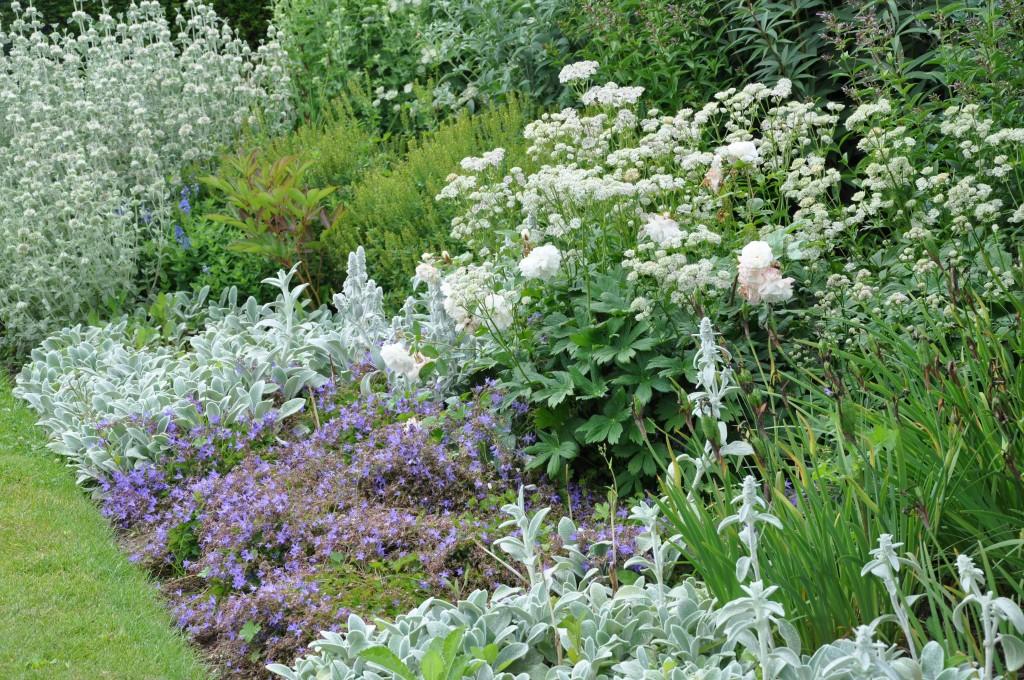 En rabatt uppbyggd kring silverfärgade, vita och blå blommor blir sällan fel.