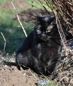 Katten kollar läget i mullvadscirkusen, antalet högar bara växer.