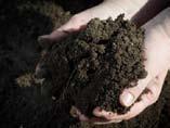 En lucker och näringshållande jord vill de flesta växter ha.