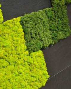 Väggplattor med äkta levande vitmossa i olika fina kulörer kommer från Verde Profilo.