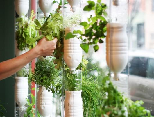 Odla sina grönsaker och kryddor i gamla pet-flaskor hängande i fönstret, det är vad windowfarming handlar om.