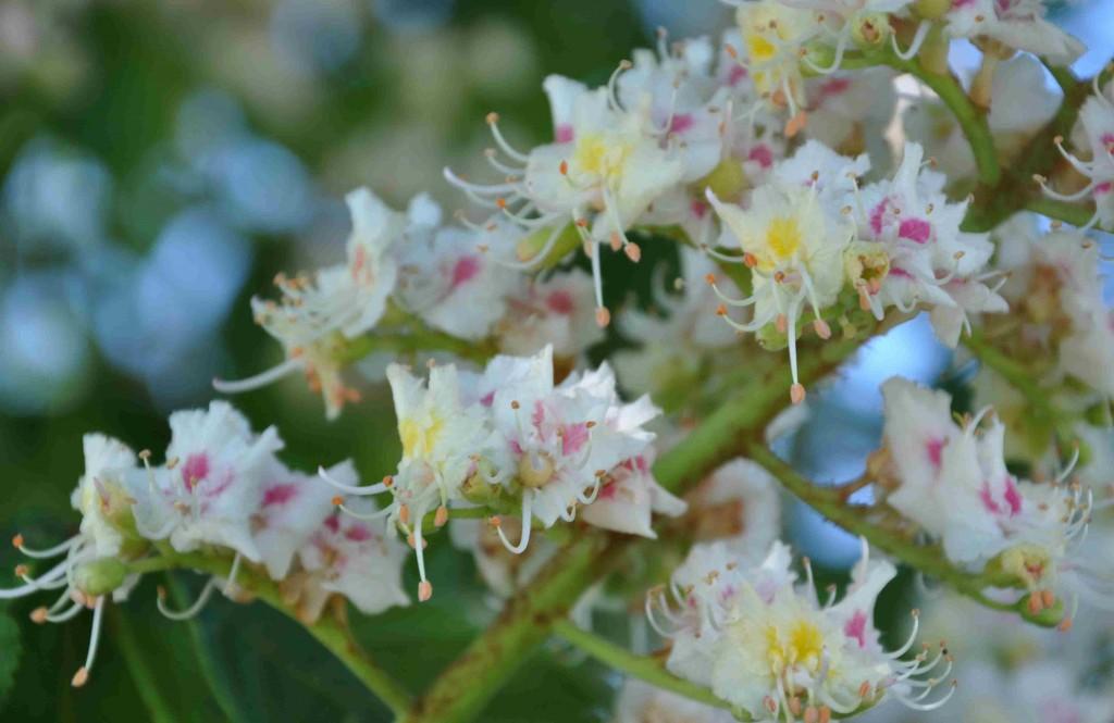 Den vita blomman har mörkrosa stänk och en gul mitt.