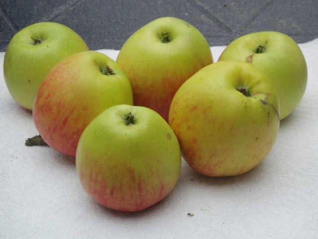Svagt röda strimmor på en gulgrön botten har äpple James Grieve.