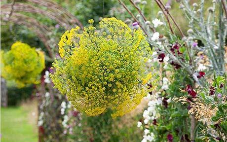 Även en simpel växt som dill kan bli så dekorativ bunden i klotform.
