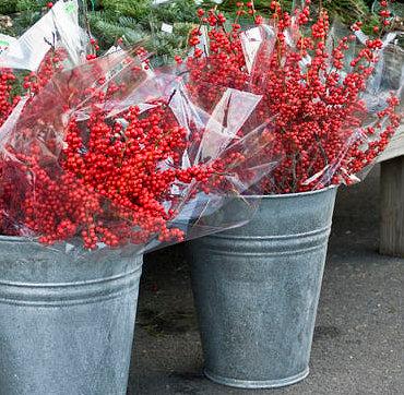 Vinterbäret är en dekorativ växt för att pynta julbordet med.