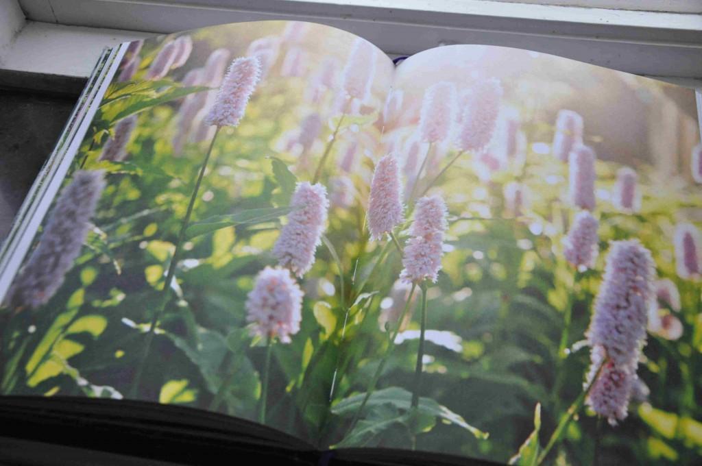 Vackra fotografier på styvt papper stödjer berättelsen i boken Växtriket.
