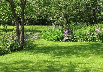 Bind ihop växterna i större sjok istället för att placera dem en och en.