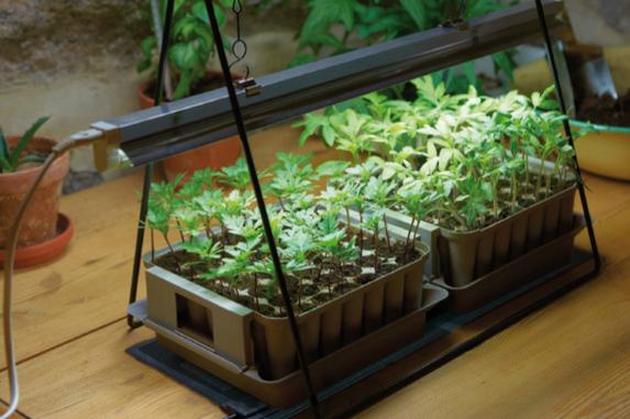 För dig med små sådder har Nelson Garden ett fiffigt startkit med växtbelysning.