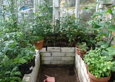Genom att höja upp växtbäddarna får man en varmare odling under tidig vår.