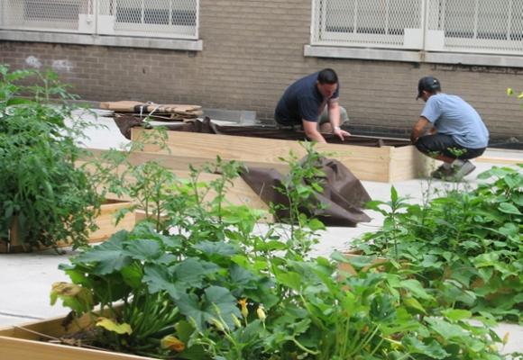 Nyanläggning av odlingsbäddar vid en stadsodling i Brooklyn.