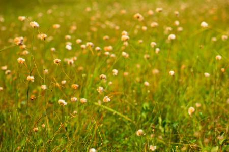 En längre gräsmatta med ängsblommor i partier är väl så vacker.