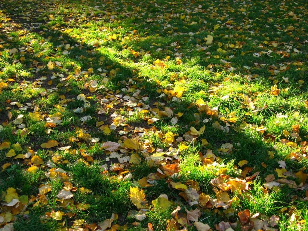 Höstlöv är bra långtidsverkande gödsel för gräsmattan.