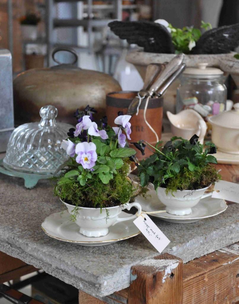 Små läckra violer i små läckra porslinskoppar blir en vacker bordsdekoration.