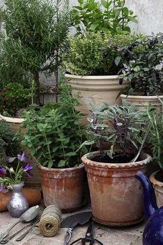 Kryddväxterna står sig extra fint i handdrejade krukor.