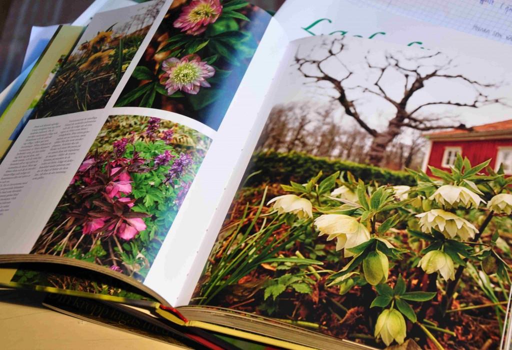 Lundens skugga är en nyutkommen växtbok av Hannu Sarenström.