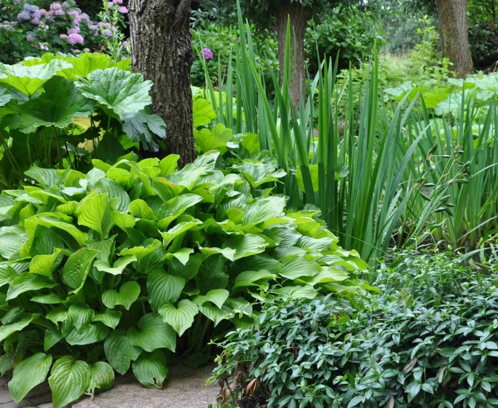 Växter som trivs på samma växtplats delar samma ståndort.