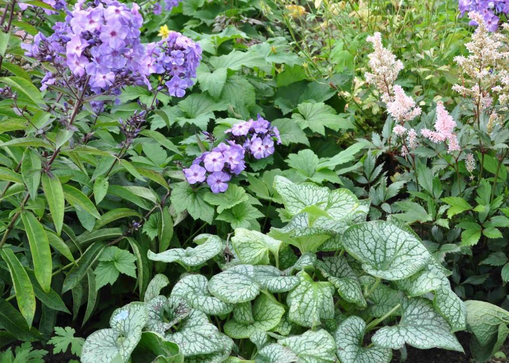Brunnera, flox och astilbe föredrar näringsrik och fukthållande jord.