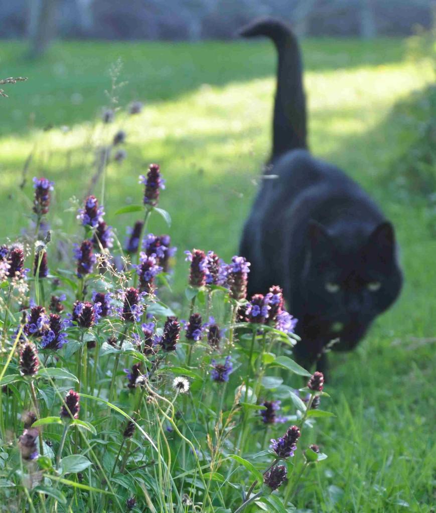 Brunörten trivs på frisk mark som ängar, gräsmattor och stränder.