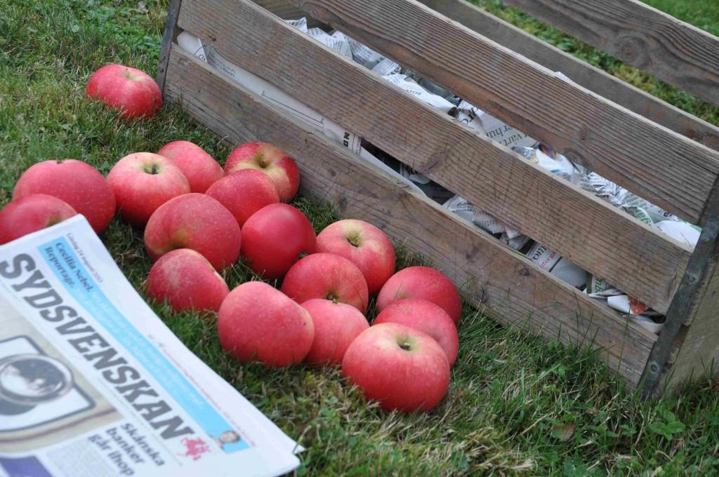 Äpplena viras in i tidningspapper och ställs svalt.