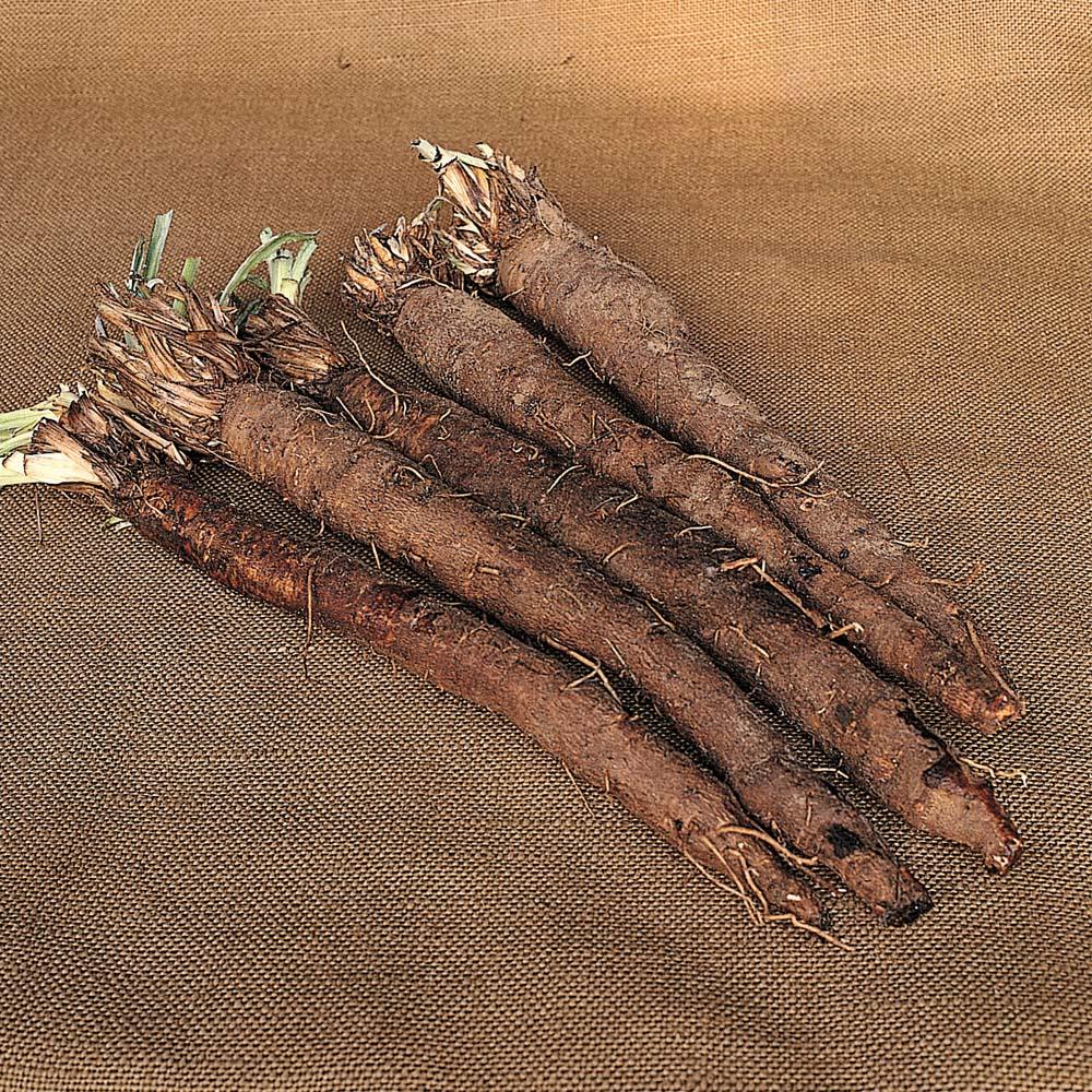 Svartroten är en lång, slank grönsak mmed vitt kött som smakar sparris.