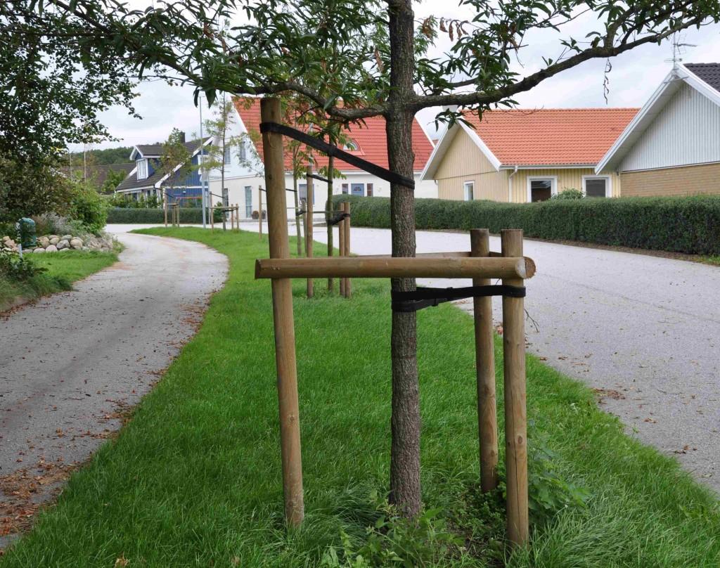 Tre stolpar som stöder ett träd kan vara bra på blåsiga platser.