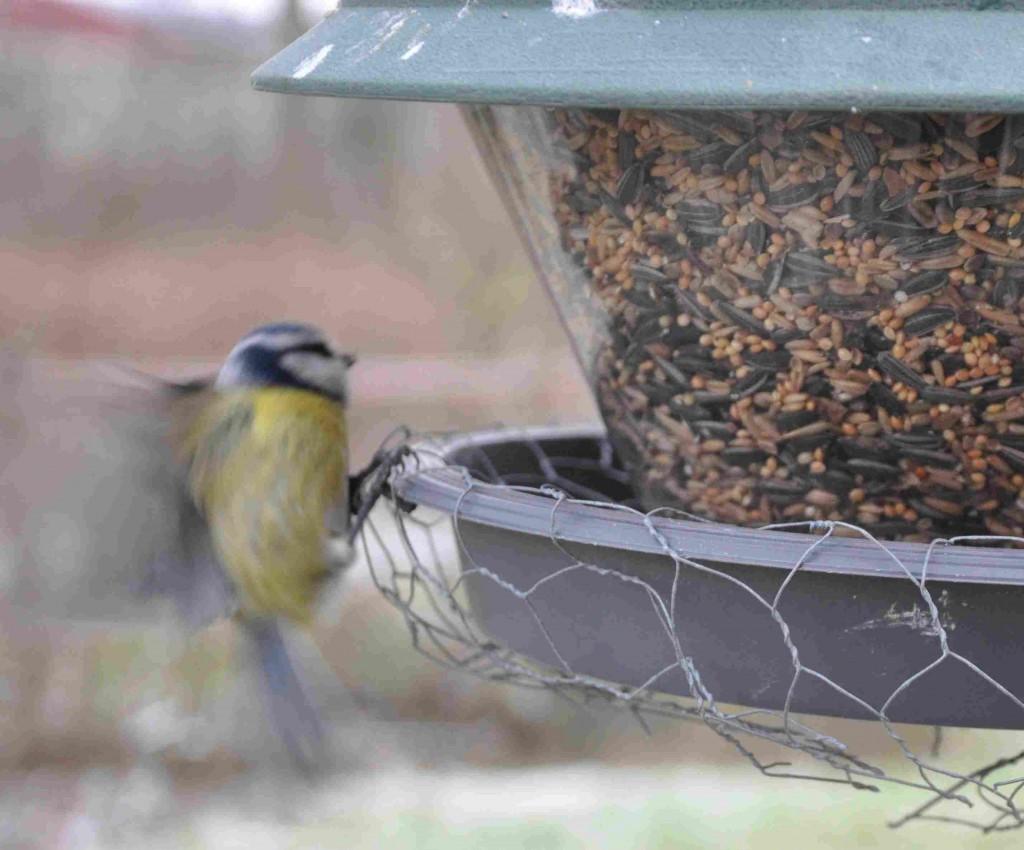 Kycklingnät skyddar maten från att skyfflas ut över kanten på fågelbordet.
