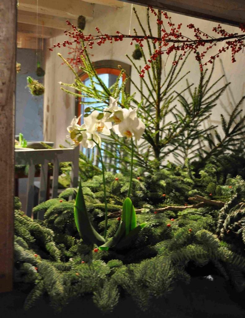 Orkidéer passar även ihop med stickigt granris.