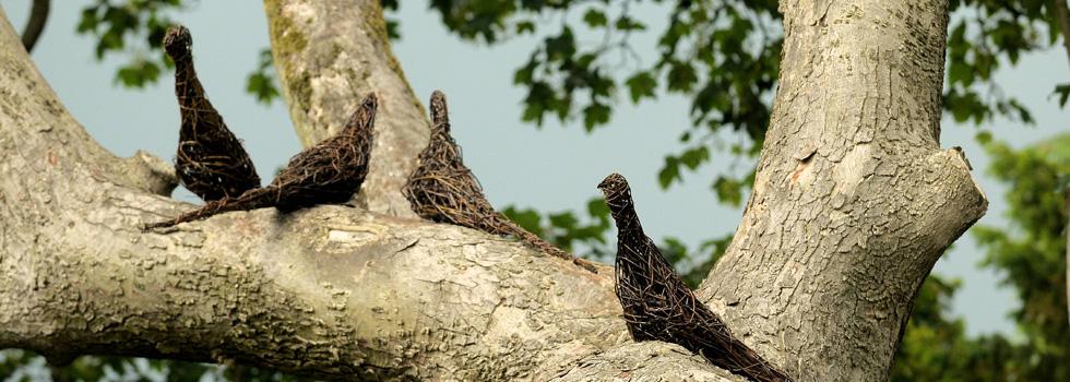 En flock duvor i pil sitter uppkrupna i trädet.