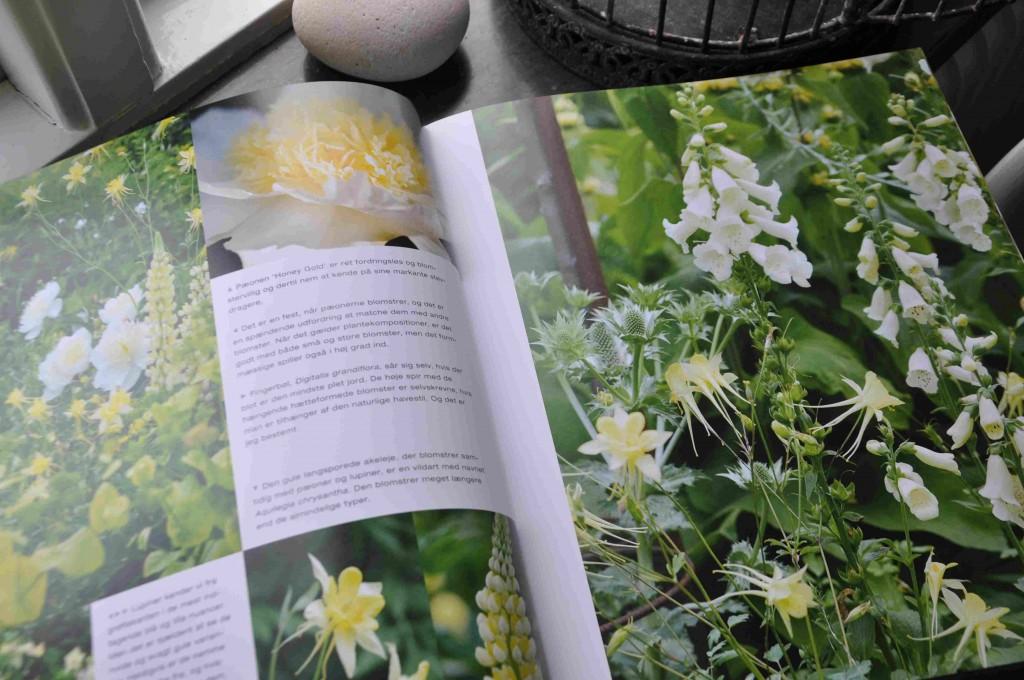 Claus Dalby är en dansk trädgårdsmästare som gett ut en bok om vita växter.