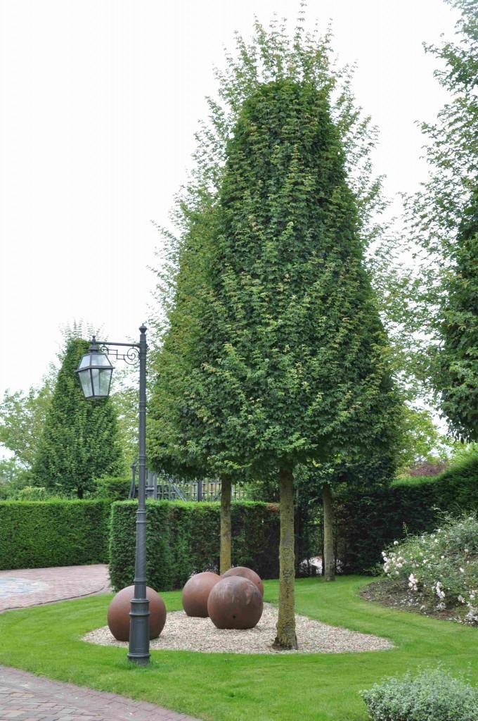 Formbeskurna träd passar in i små utrymmen.