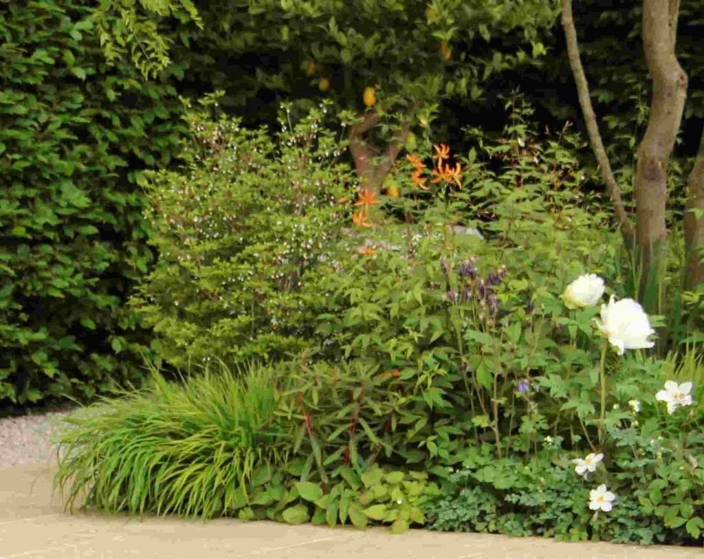 Krolliljor trivs i halvskuggigt läge i en humusrik och genomsläpplig jord.