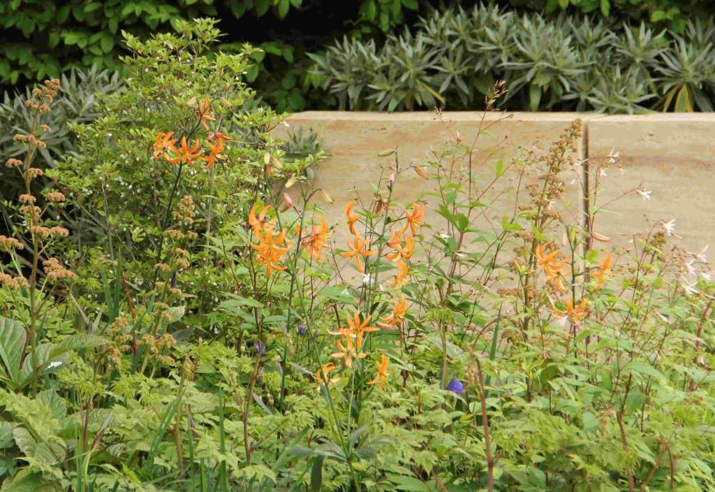 Krolliljan i Ulf Nordfjells Chelseaträdgård har ett underbart glest växtsätt.