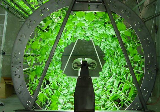 Vid cirkulerande odlingar utnyttjas ljuset till max.