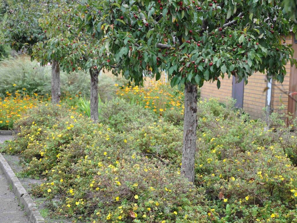 Träd i buskfält ger en ostörd rotmiljö och tillförsel av humusämnen.