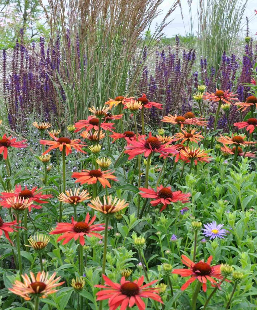 Kontrasterande blomformer och färger ger liv åt rabatten.