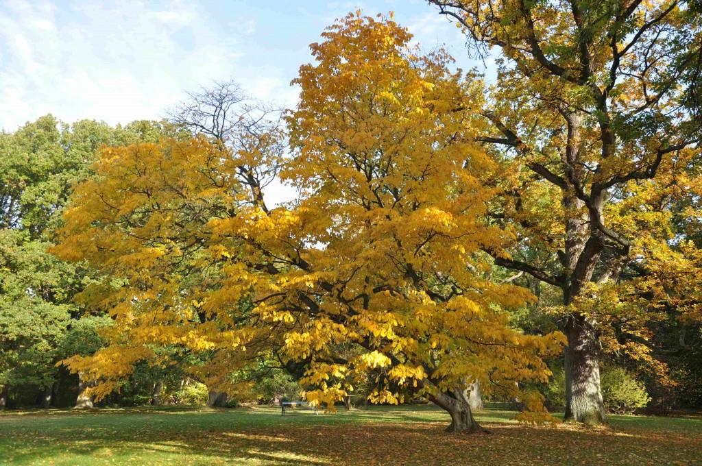 Träden tar upp stora mängder koldioxid under en dag.