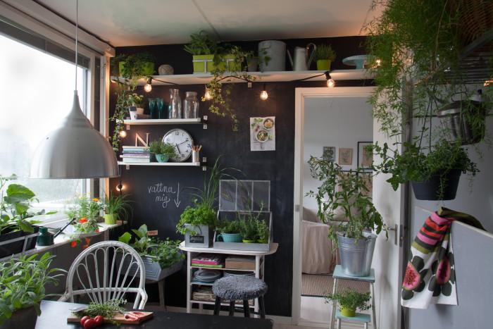 Kryddor och andra ätliga växter flyttar in i köket.