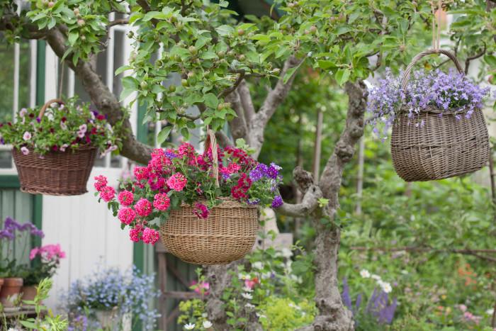Hängande blomsterkorgar svävar i de knotiga äppleträden.
