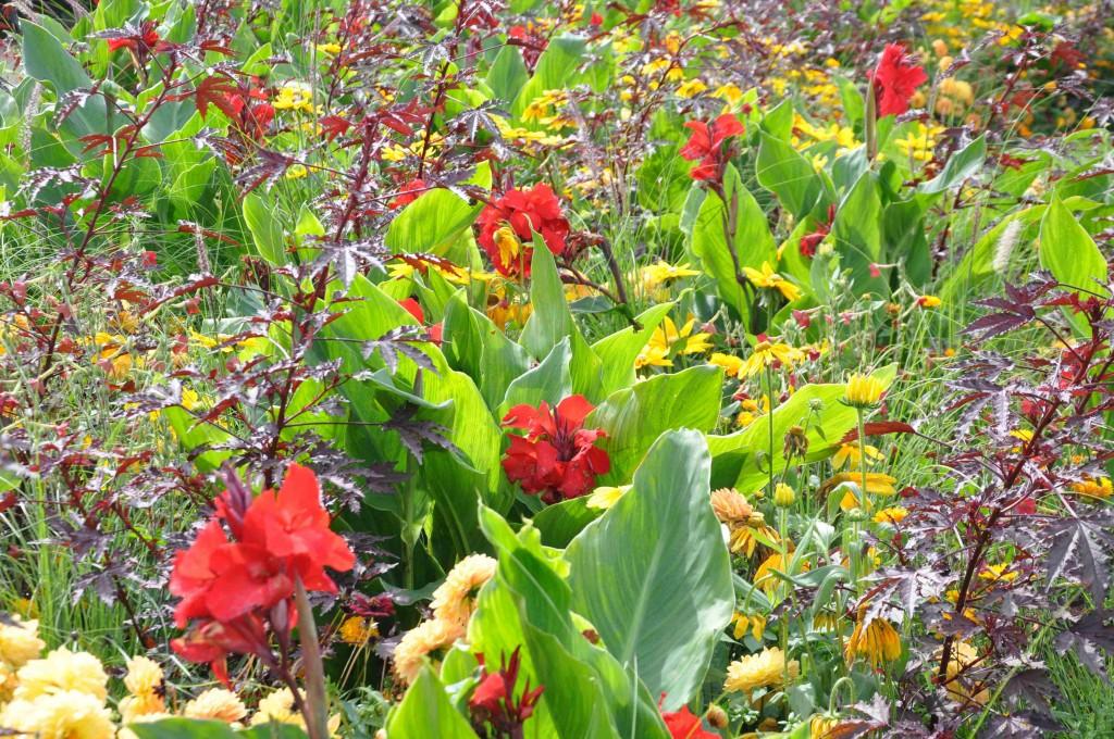 Vävda fält där växterna smälter in i varandra.