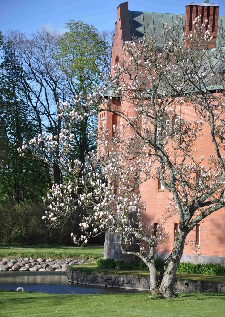 Slottsparken runt Hjularöds slott hyser en del exotiska buskar och träd.
