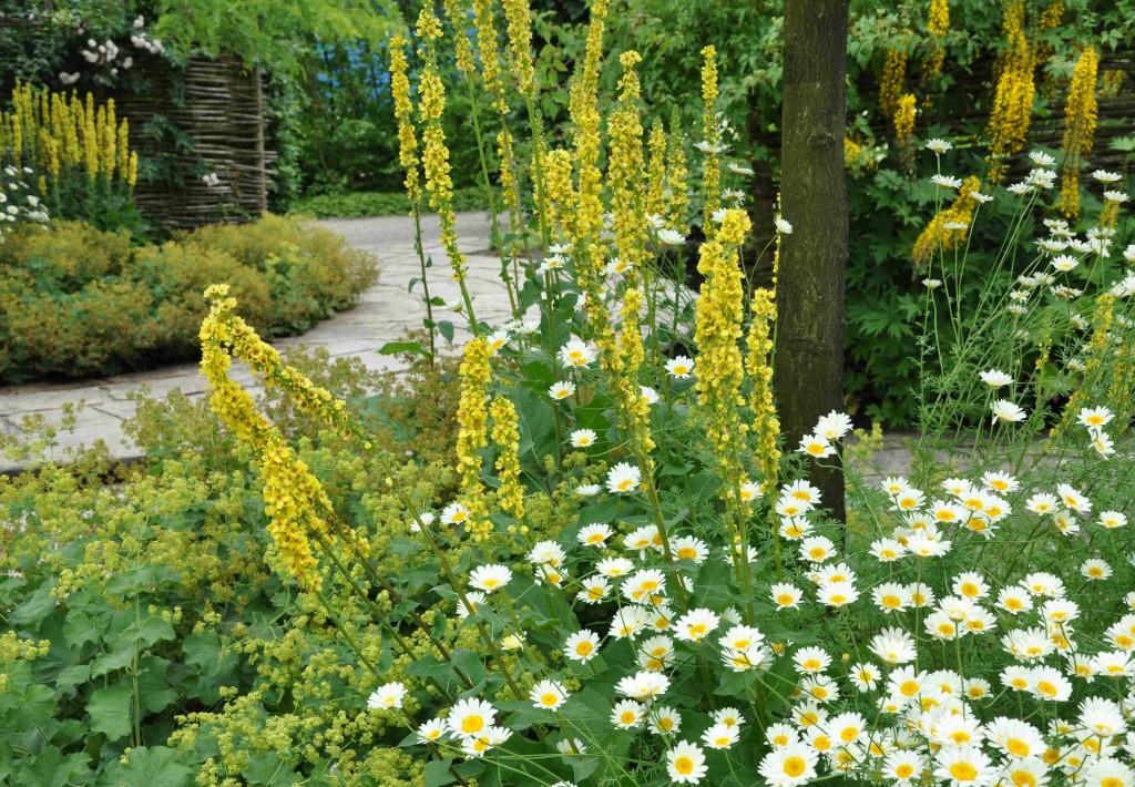 gult och vitt i kombination blir fräscht och effektfullt i trädgården.