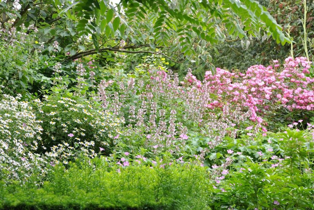 En fond av en häck, mur eller staket ger en lugn bakgrund till de blommande växterna.