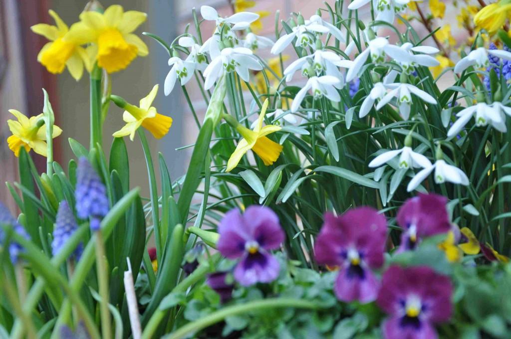 De första vårblommorna är underbara vårtecken.
