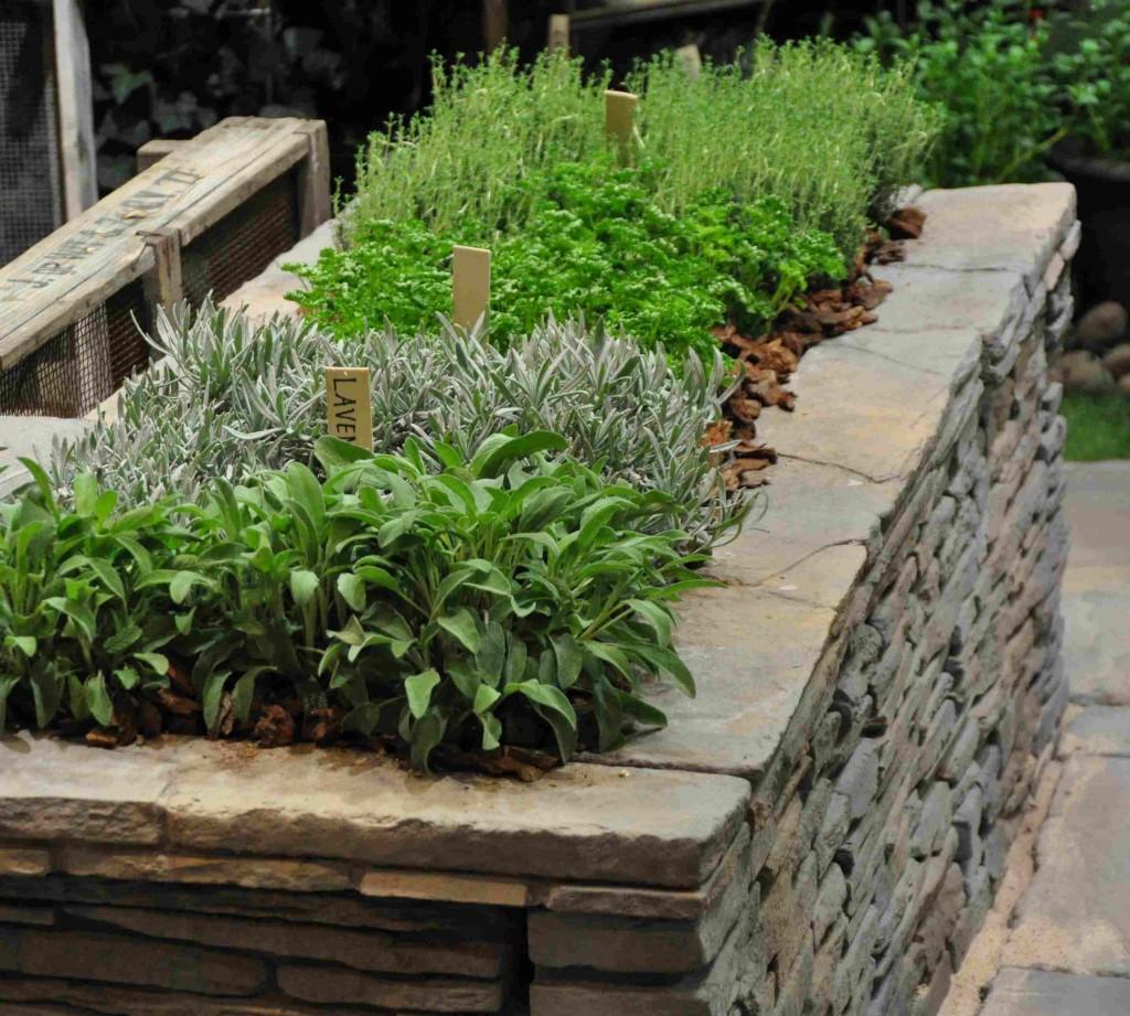 Örter och kryddväxter passar bra att plantera i en upphöjd växtbädd.