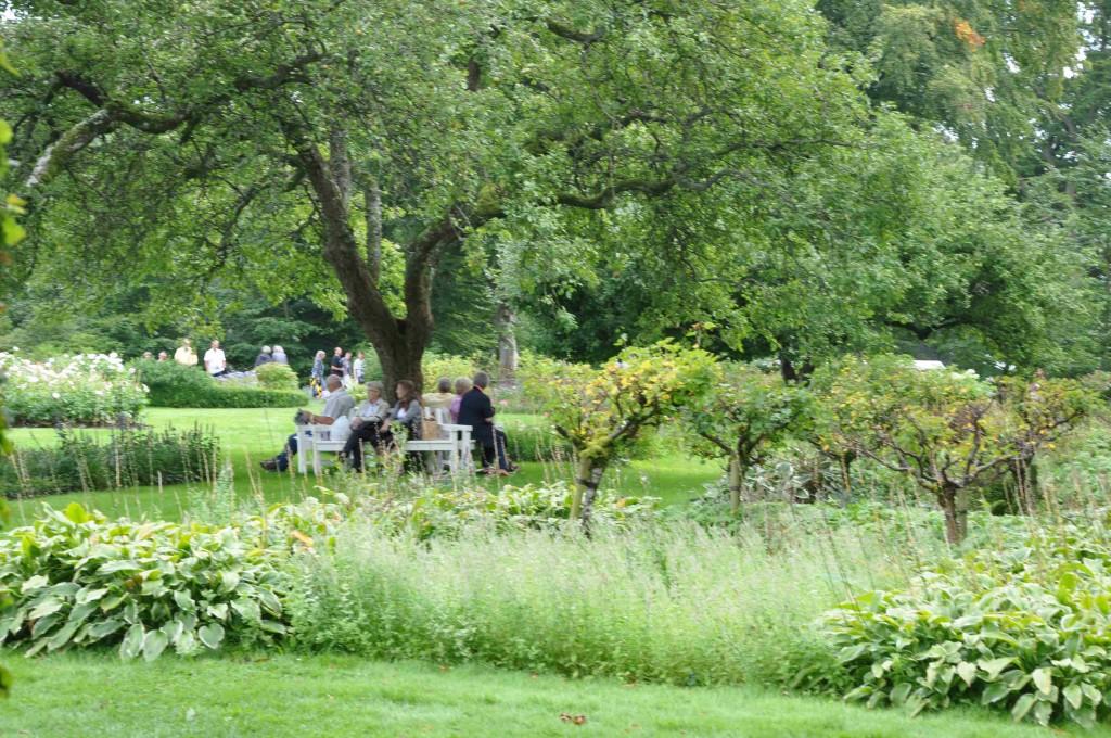 Träden blir samlingspunkter och skydd för solen en het dag.